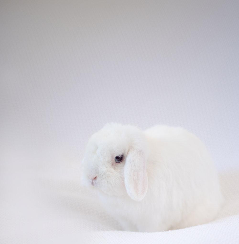 san-gabriel-valley-pet-photographer-bunny