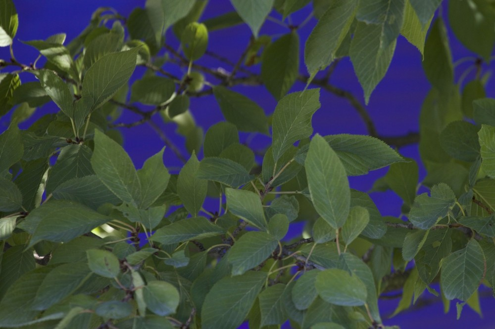 Palette Végétale - 2
