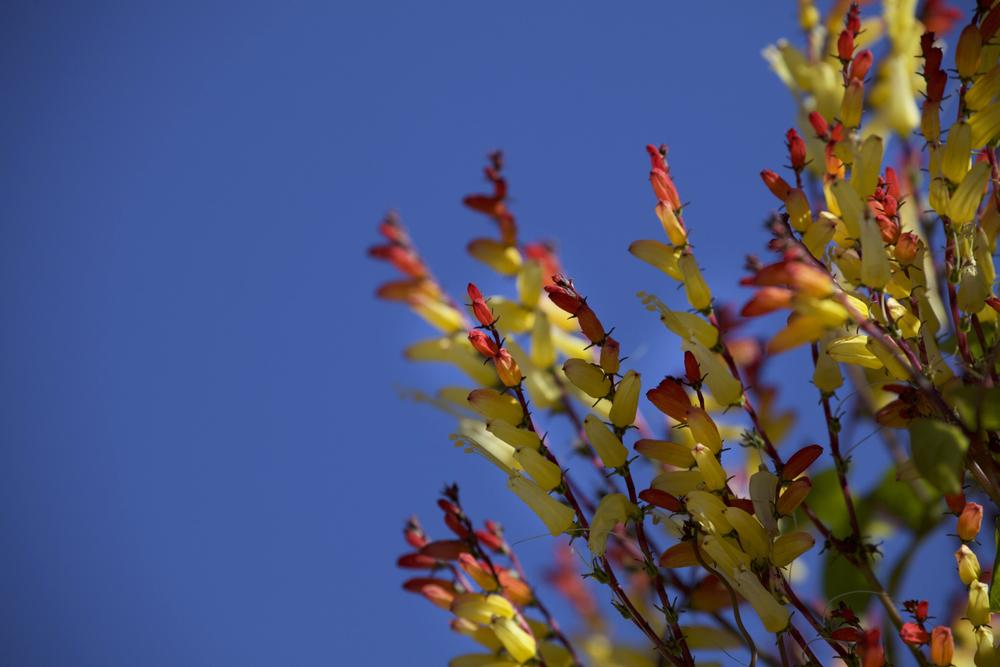 Palette Végétale - 21