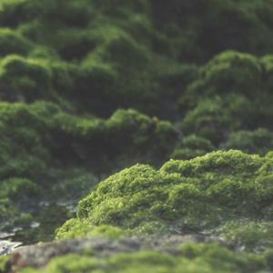 Moss300.jpg