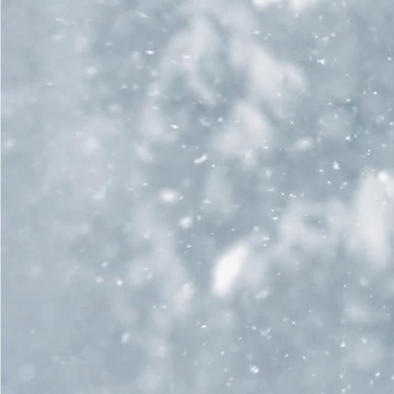 SnowInThePines.jpg