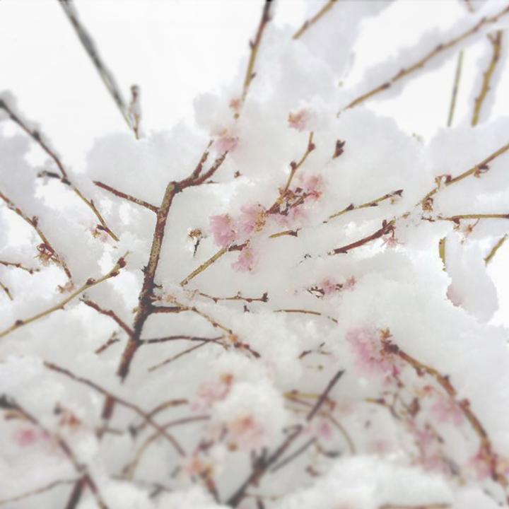 SnowFlowers.jpg