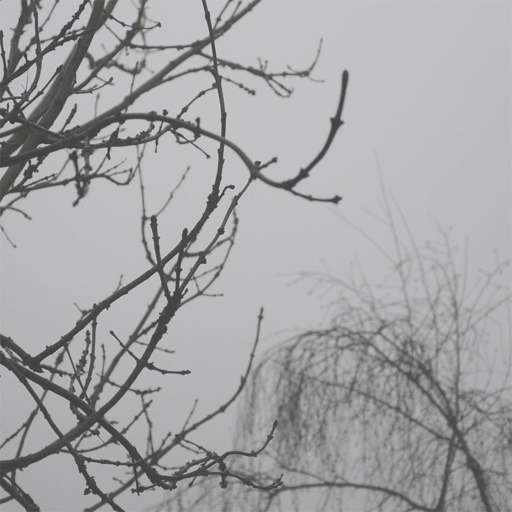 BirdsongInTheRain.jpg