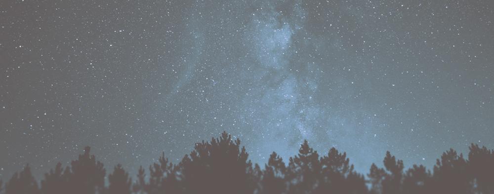 ForestNight.jpg