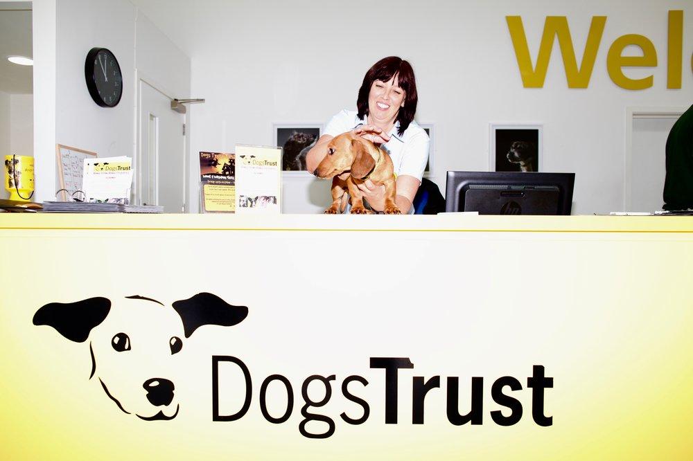 Dogs Trust Dogs