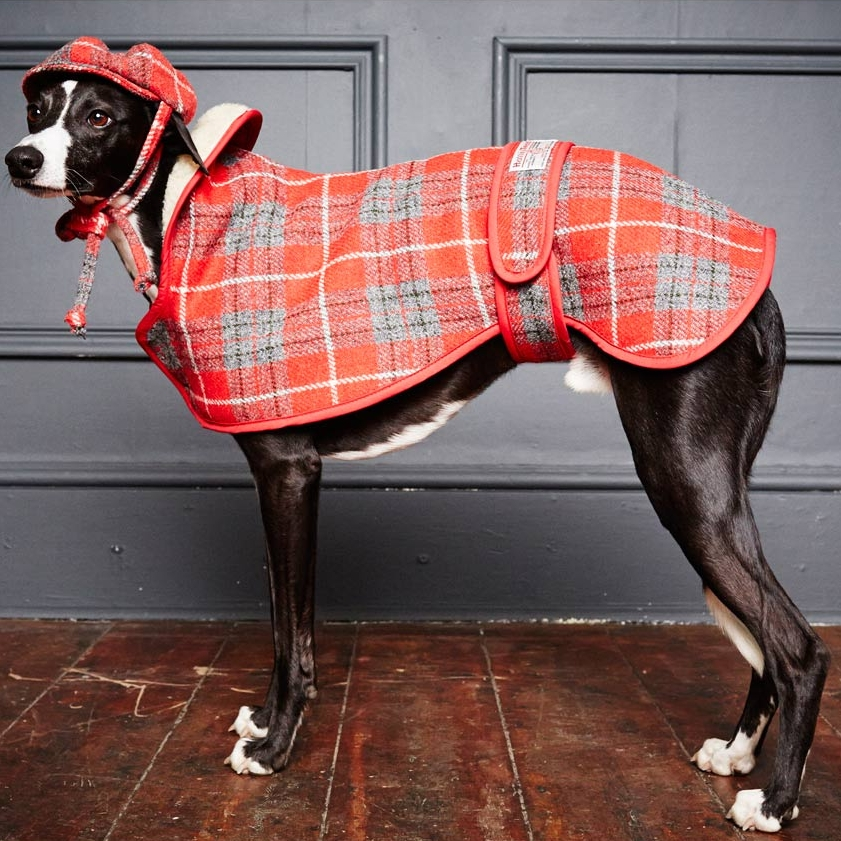 greyhound-hoxton.jpg