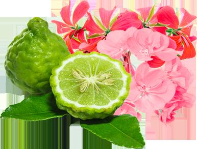 White Angelica White Angelica ™ er en beroligende og lindrende blanding, der fremmer en følelse af beskyttelse og sikkerhed.Vigtige ingredienser er bergamot og geranium.(Ikke inkluderet i Raindrop kit.)