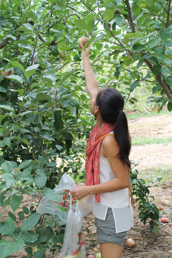 Orchard-3.jpg