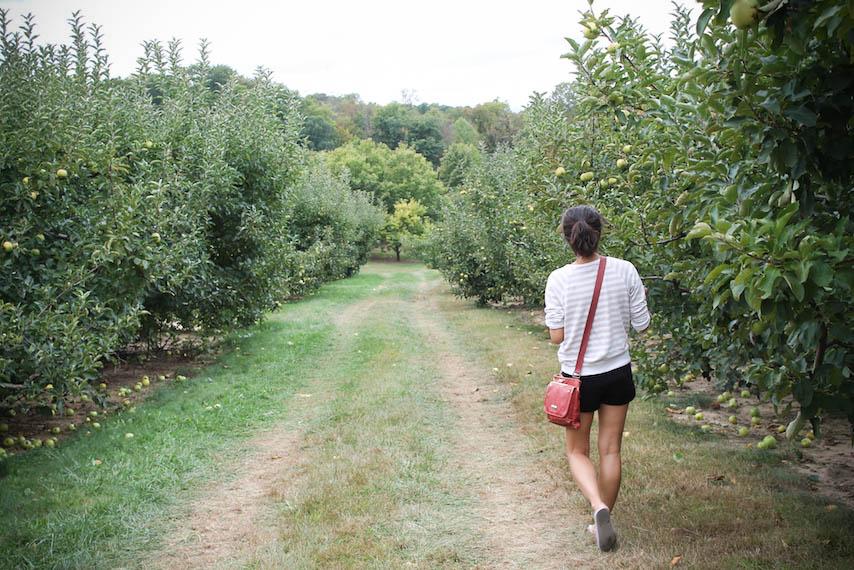 Orchard-5.jpg
