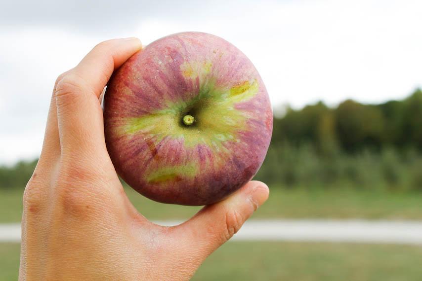 Orchard-11.jpg