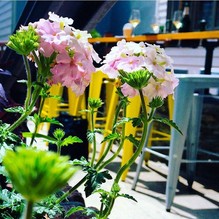 Space Flowers Stools - CROP.jpg
