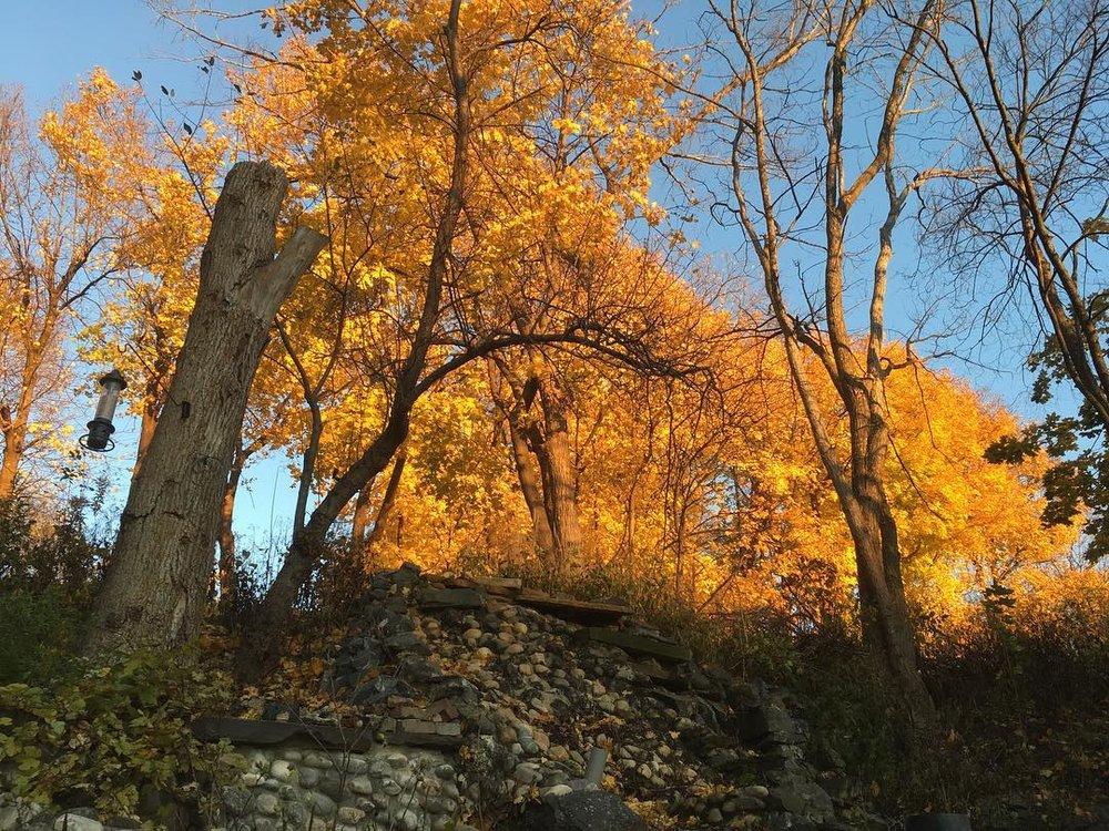 Yellow Trees.jpg