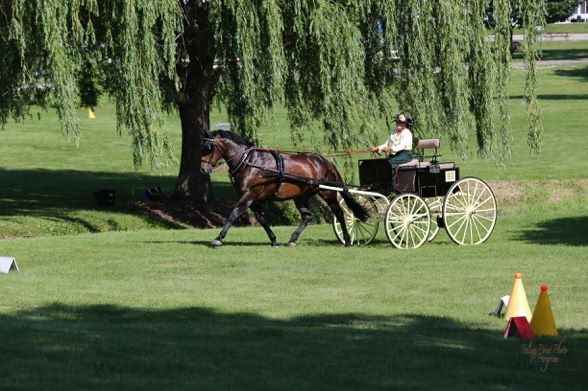 Luna (driven by Susan) at the 2015 Villa Louis Carriage Classic in  Prairie du Chien, WI.