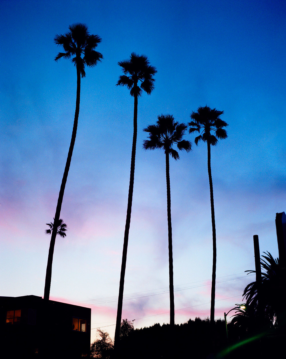 02_01_LA_Palms_Night.jpg