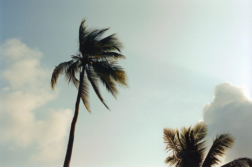 01_palm.jpg