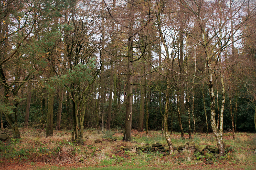 treehouse (71).JPG
