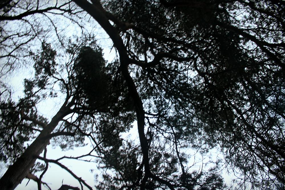 treehouse (73).JPG