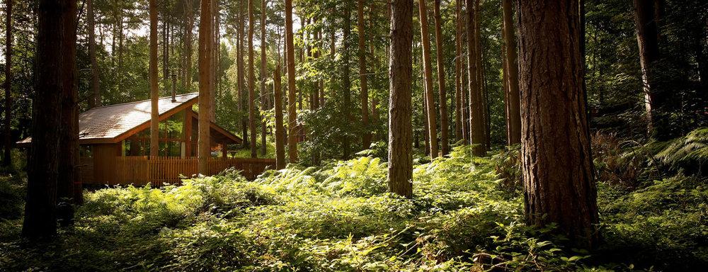 treehouse (3).jpg