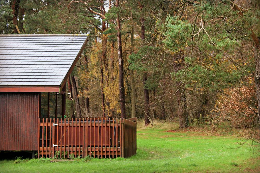 treehouse (13).JPG