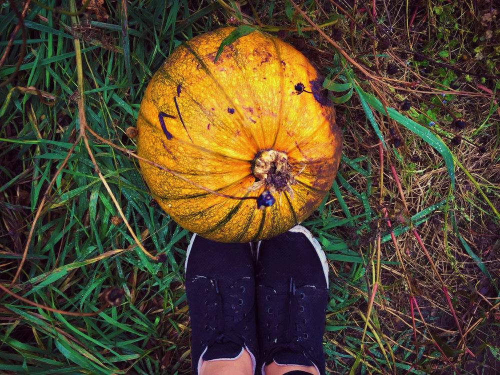 Pumpkin Patch7.jpg