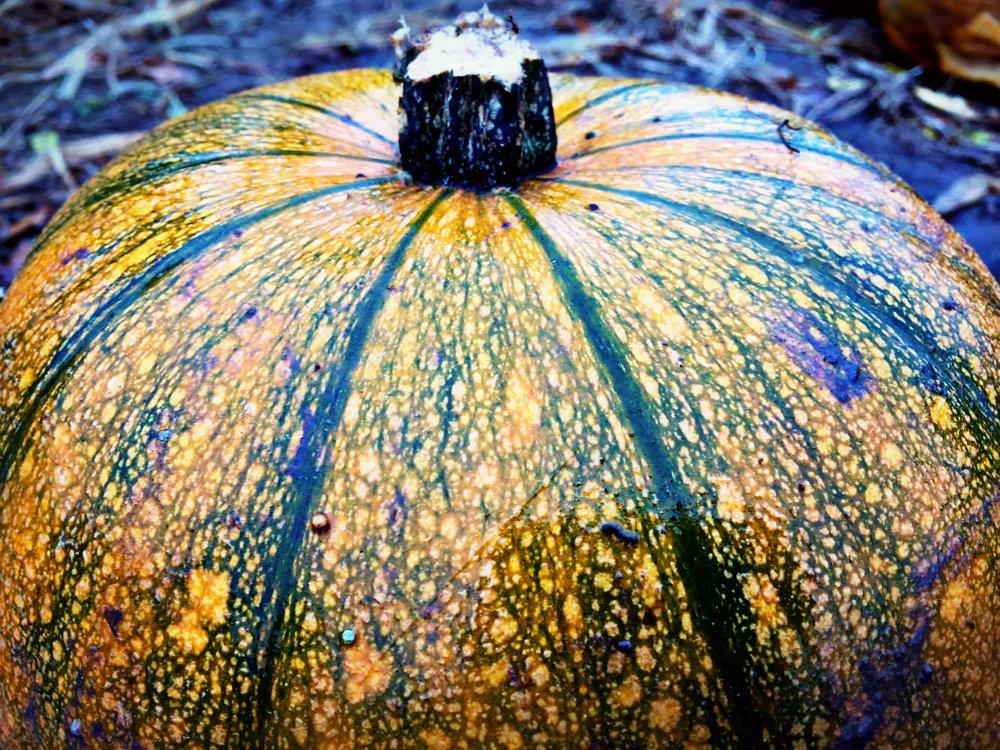 Pumpkin Patch3.jpg