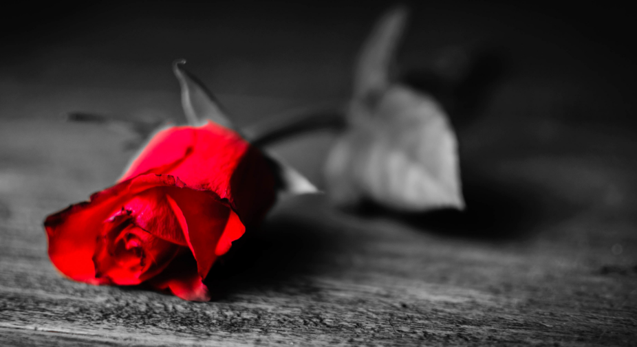 Photo Description: In this black and white photo, a rose lay atop a rough wooden surface. The petals of the rose are in focus and a vibrant red, center-left.  The flower head is the only part of the image in color. The stem and leaves of the rose fade into a blur off to the right of the petals.