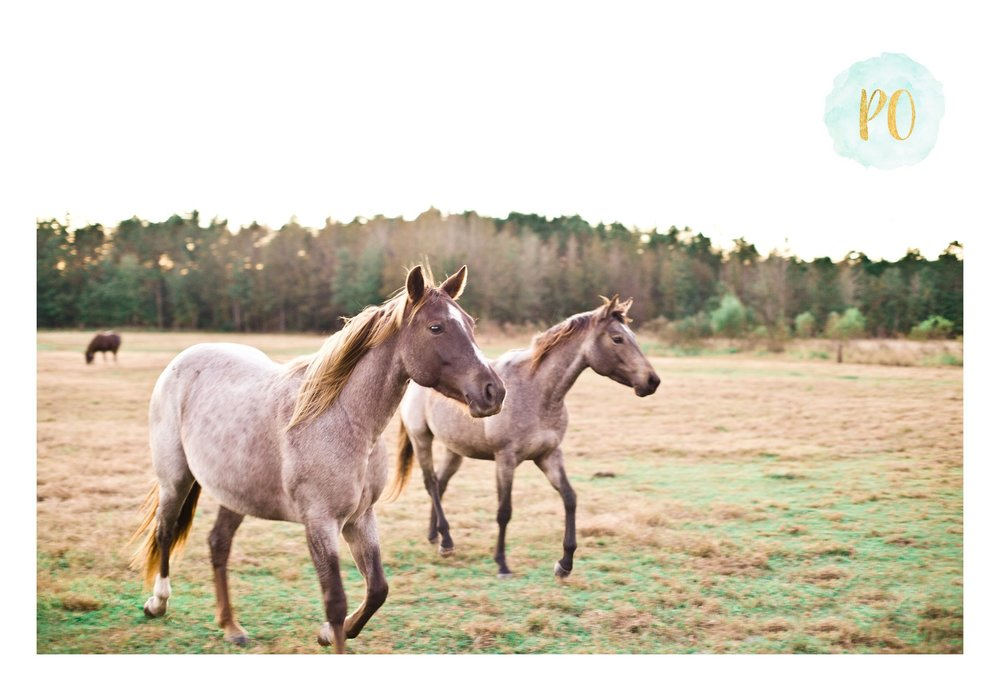 fall-horse-farm-family-session-myrtle-beach-conway-sc-photos_0007.jpg