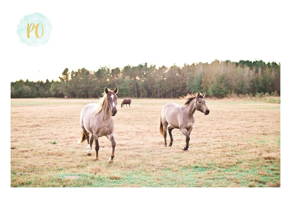 fall-horse-farm-family-session-myrtle-beach-conway-sc-photos_0013.jpg