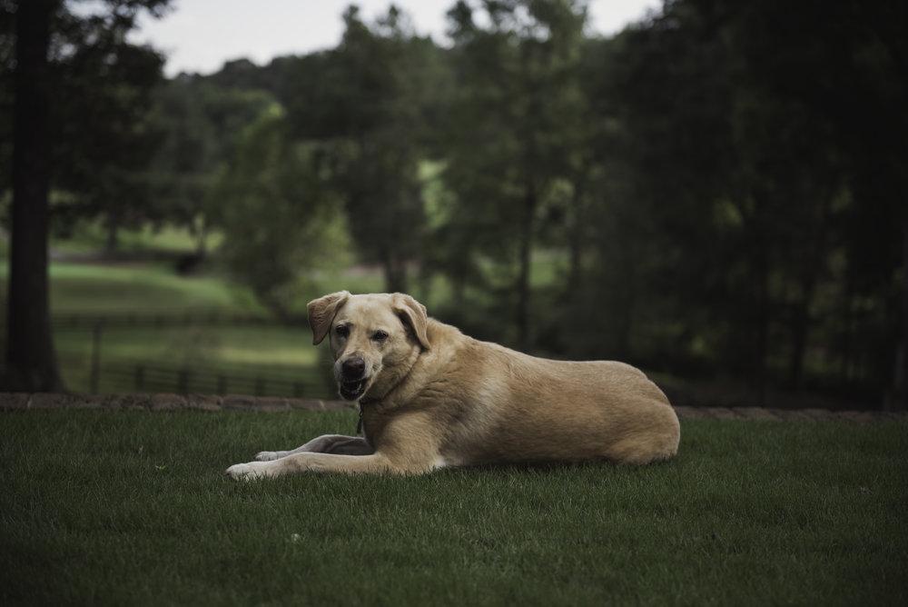 JennyMelickImagery_dog.jpg