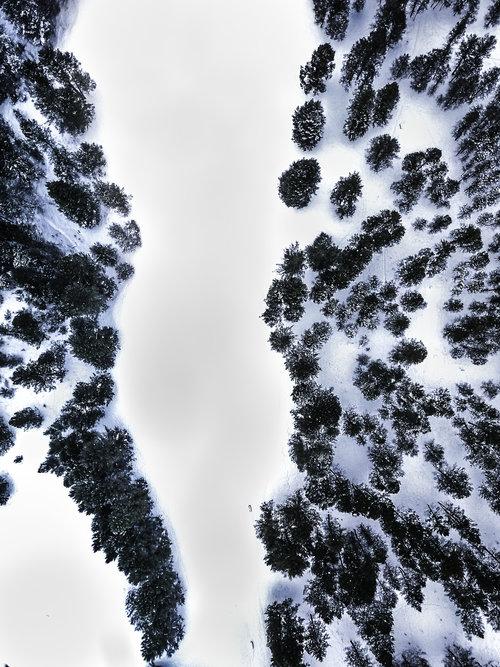 Trees+invermere.jpg