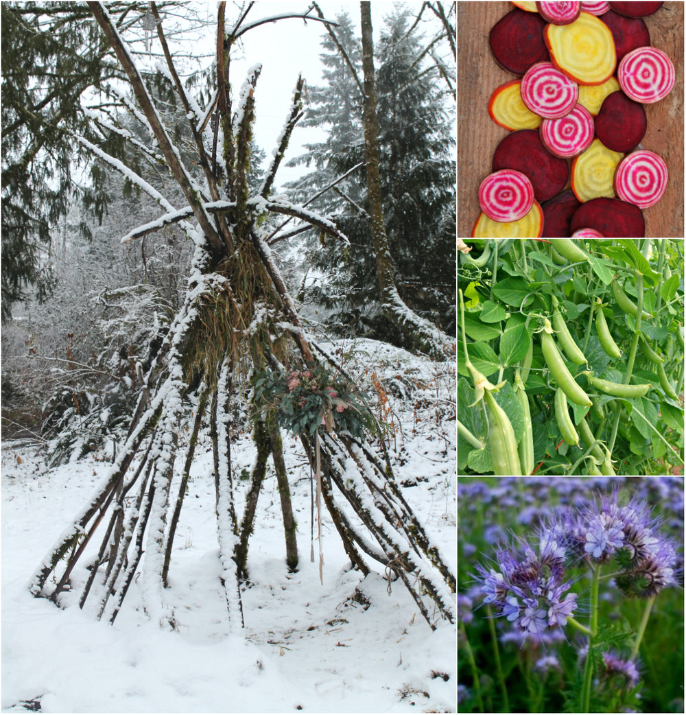 The windfallen branch hut I built for our peas, beans and nasturtiums, sugared with a winter-to-spring transitional snow day. Then, top to bottom, some of the seeds I ordered from Uprising Seeds. Organic, non-gmo mixed beets, sugar snap peas and Bienenfreund flowers. Staples of our garden each year. Uprisingorganics.com
