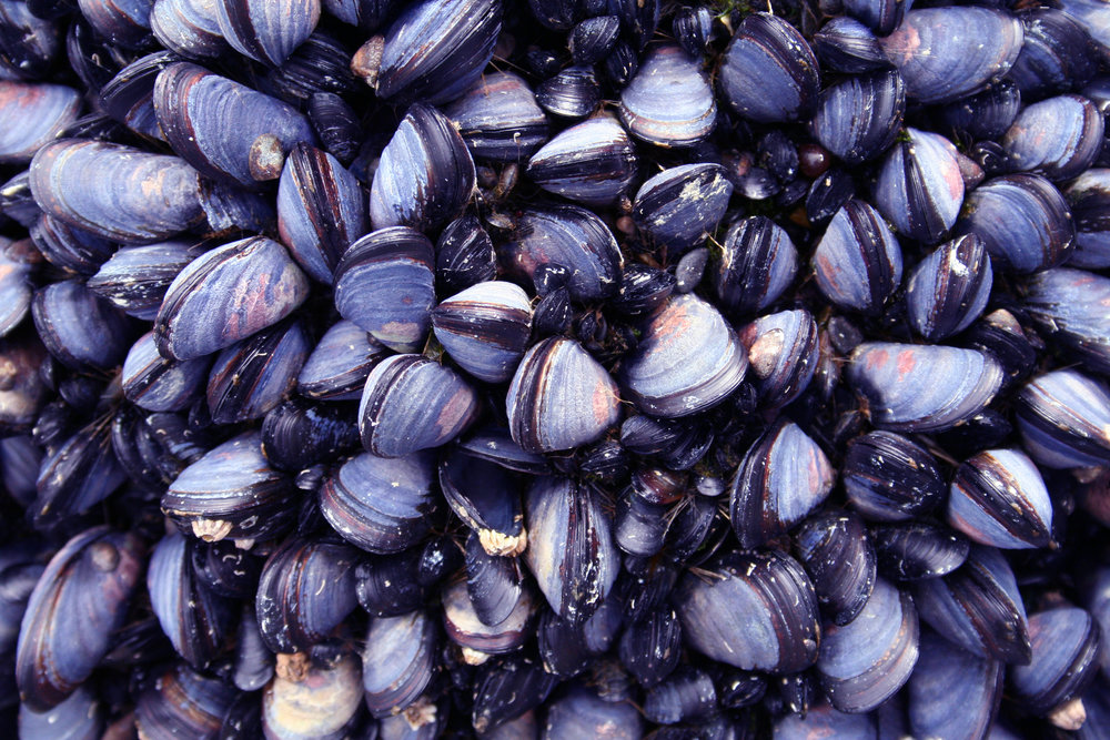 Black mussels served as part of the wedding meal or clean shells used as table décor or calligraphed escort cards. Photo by JPrescott/iStock / Getty Images