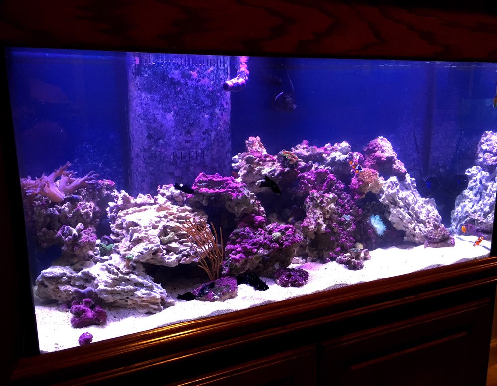 90 Gallon Saltwater Reef Aquarium Mixed Community Fish And Invertebrates With Live Rock Corals