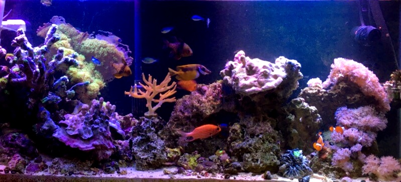 55 Gallon Reef Aquarium