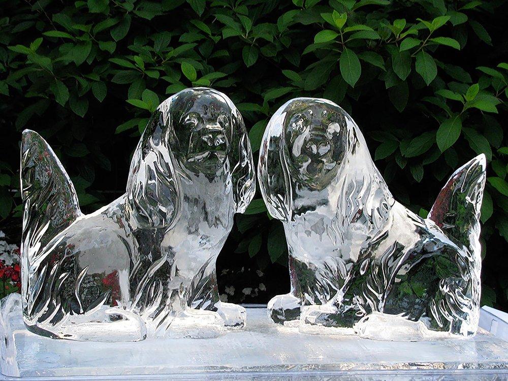 dog-pair.jpg