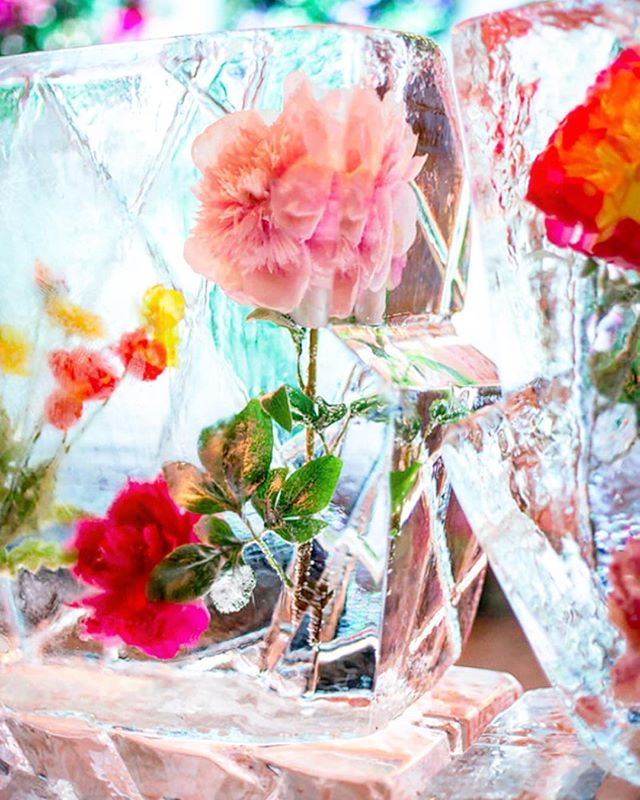#Repost @latelierrouge ・・・ 🌷 Pretty In Pink 🌷 #icesculpture #wedding #weddingreception #weddingplanner #icebar #inspiration #partyinspiration #partydecor #flowerdesign #frozenflowers #frozeninice #frozen #beautiful