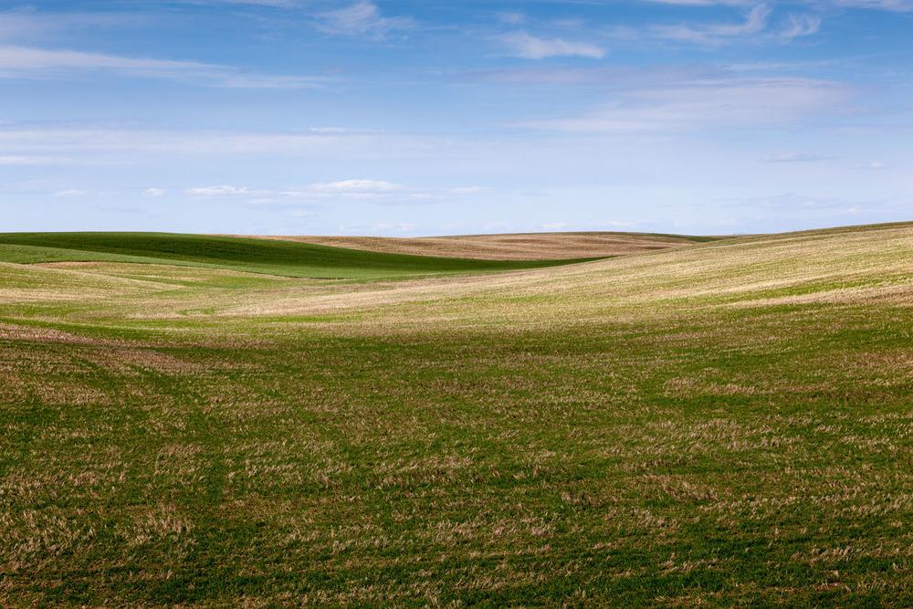 bondi_landscape_08.jpg