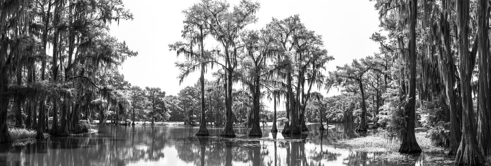 Cypress trees and spanish moss, Caddo Lake, Texas