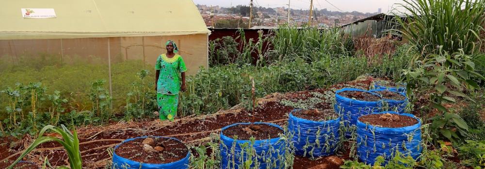 Twalalishwe Farm, Rose