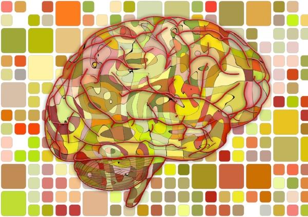 brain-951871_1920 pixabay.jpg