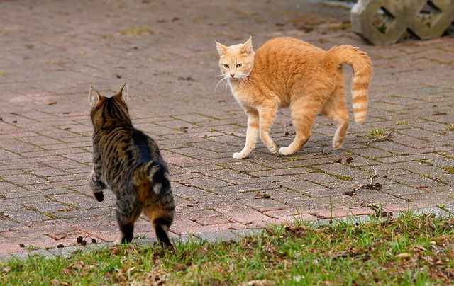 animal-3283837_640 hunch back cats scaredy cats.jpg