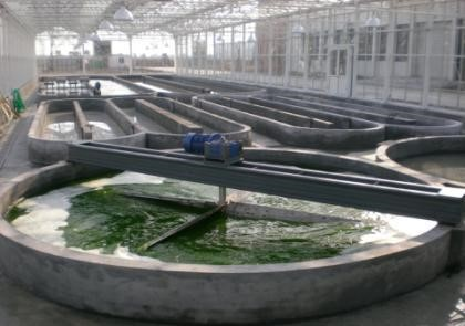 Indoor runway pond photobioreactor