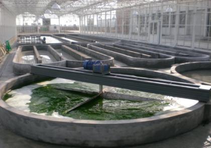 Indoor runway pond photobioreactor