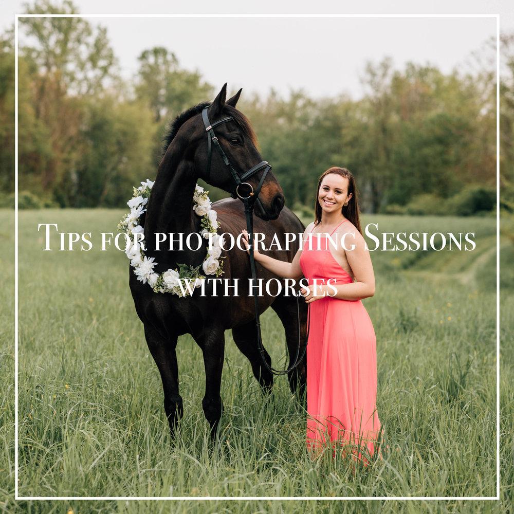 sessionswithhorses.jpg