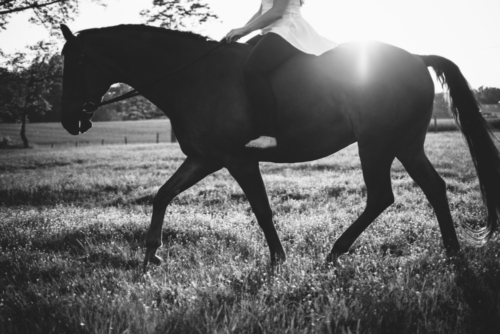 maryland portraits with horses