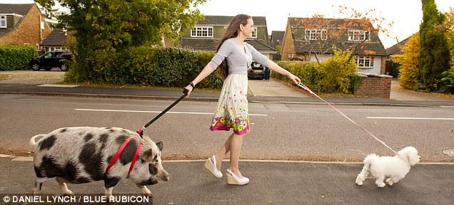 pig walking.jpg