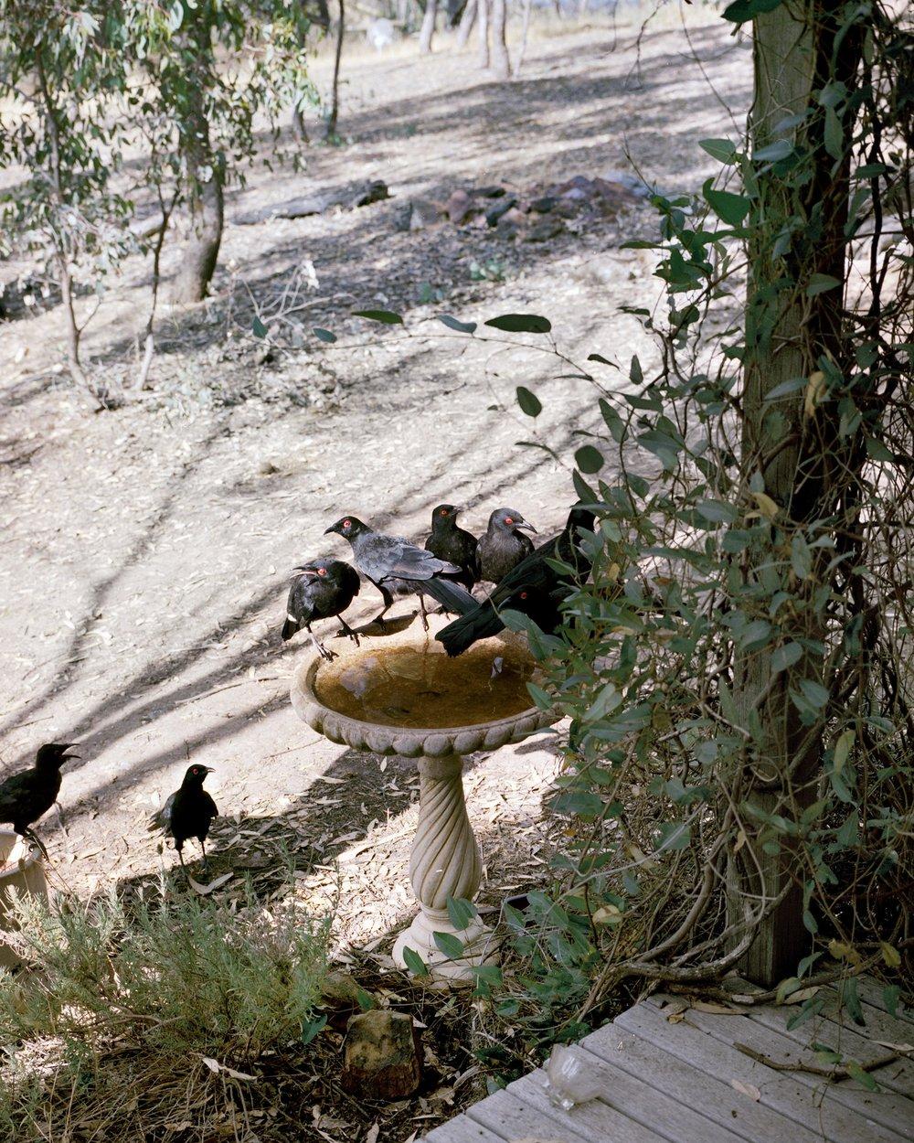 Birds Colour correct.jpg