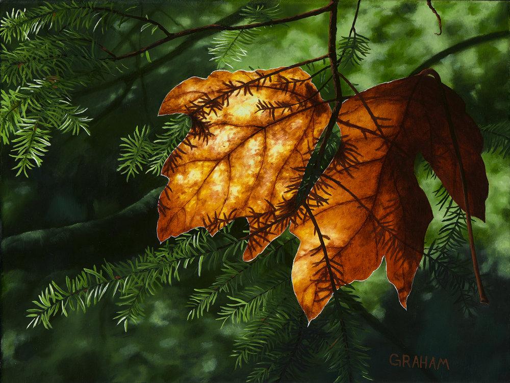 Autumn Glow  Web12x16.jpg