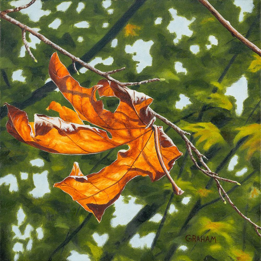 Autumn-in-August-4-Web.jpg