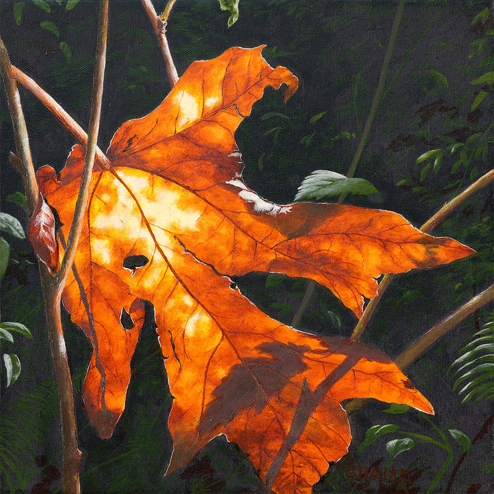 Autumn-in-August-5-Web.jpg